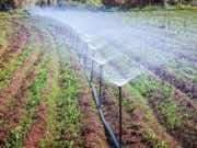 European Parliament's INTA Adopts Morocco-EU Agriculture Deal