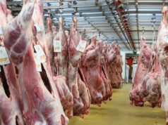 Essaouira Court Sentences Butches to 3-4 Months in Jail for Selling Rotten Meat