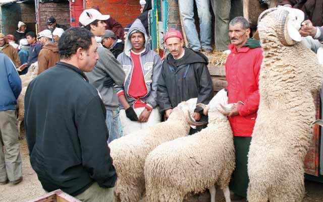 Sheep Prices See Decline for Eid Al Adha 2017