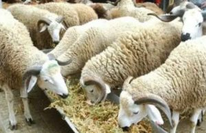 Morocco to Celebrate Eid Al Adha on August 12