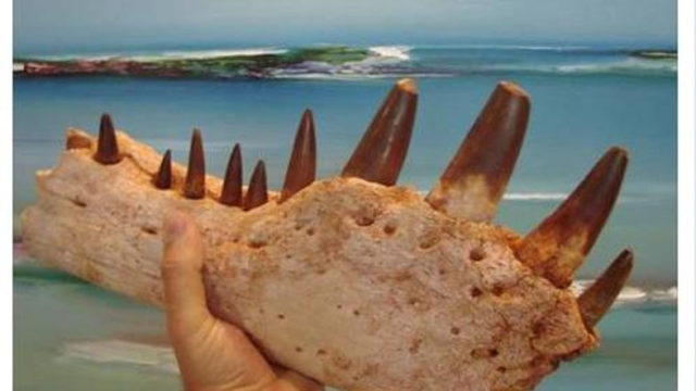 Investigates Dinosaur Fossil Trafficking After Irish Collector Brags about Bone