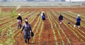 OCP Group to Develop Soil Fertility Map at Madagascar Agricultural Caravan