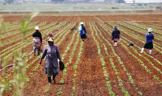 Why Morocco Must Reform Its Development Model, and How