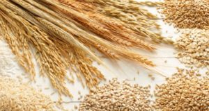 Cereal Production in 2016-2017 Largely Exceeding Average Season