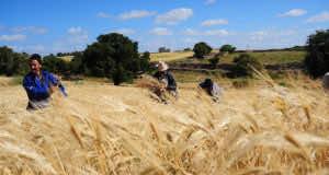 Moroccan Wheat Market Interest Australian Operators