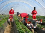 Spain to Hire 10,400 Moroccan Seasonal Workers