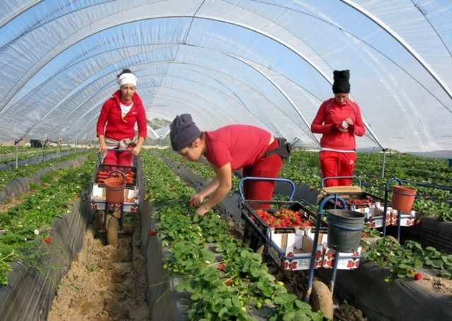 Ministry of Employment Again Denies Sexual Assaults Recorded Against Spain's Moroccan Farmers