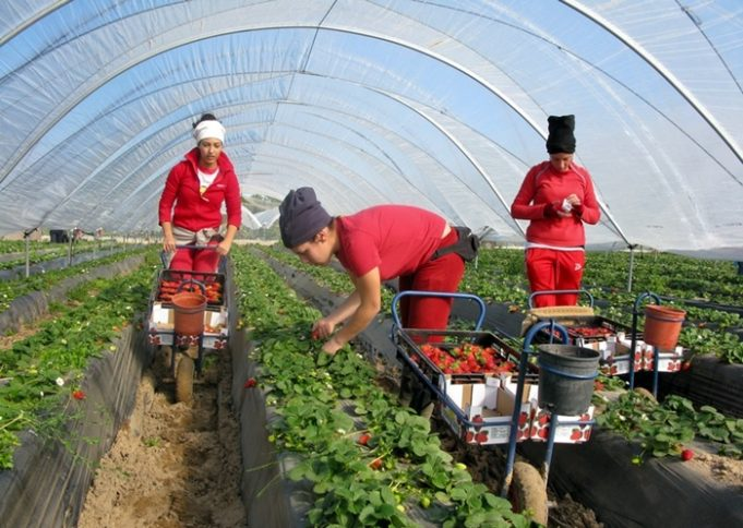 Moroccan Workers: 2nd Highest Contributors to Spanish Social Security