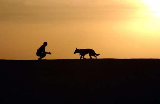 Zoophilia: Stray Dog Bites Off British Tourist's Penis in Essaouira
