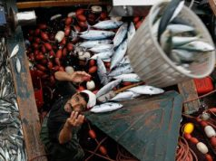 MEPs to Evaluate Benefits of Fisheries Agreement in Western Sahara