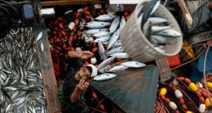 Fight Brewing over Western Sahara Inclusion in EU-Morocco Fisheries Deal