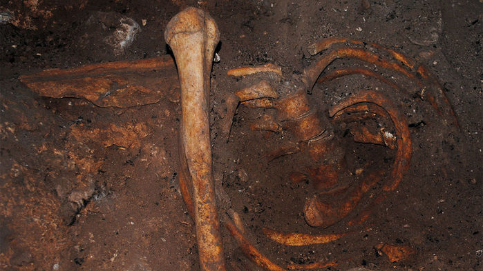 Oldest Nuclear DNA from Africa Discovered in Morocco