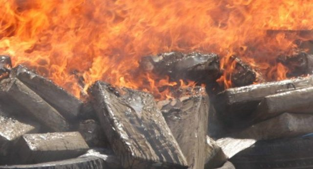 Over 6.4 Tons of Cannabis and Prohibited Products Incinerated in Laayoune