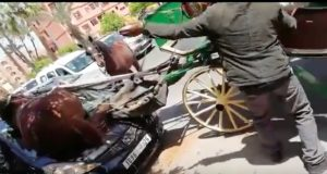 Carriage Horse Badly Injured After Crashing into Car in Marrakech