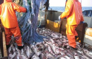 FAO: Morocco 13th in Global Fish Production
