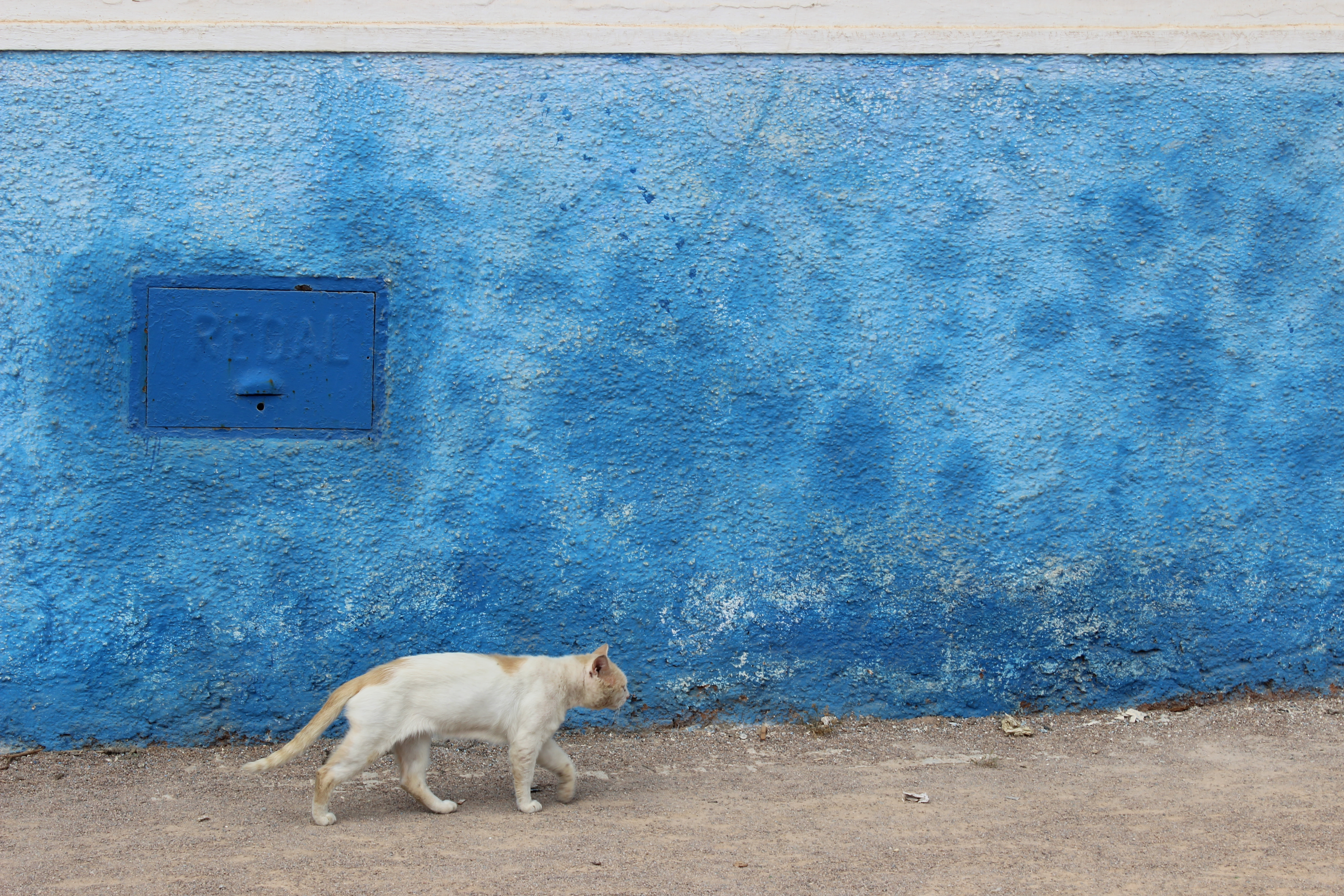 In Photos: Morocco's Cat Culture
