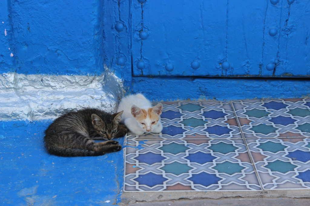 Man Dies of Rabies in Spain After Cat Bite in Morocco