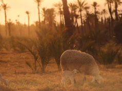 Fall in Love with Morocco in Under 5 Minutes
