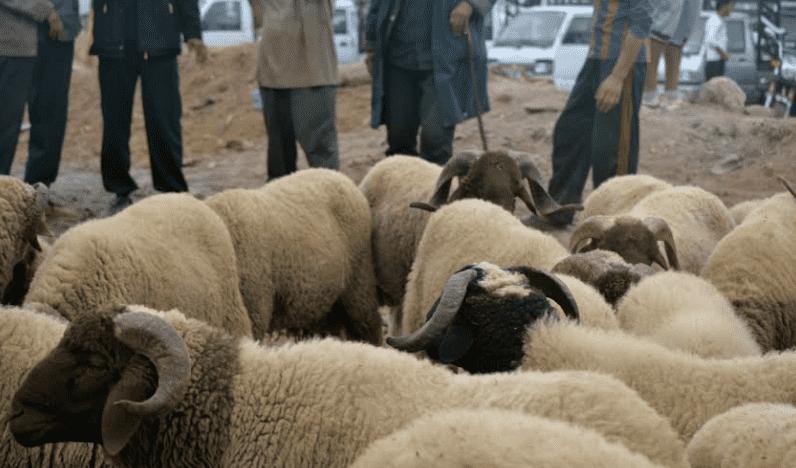 How Moroccans Celebrate Eid al-Adha