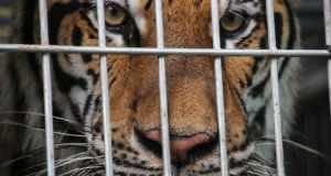 Animal Trafficking in UAE Still a Major Problem