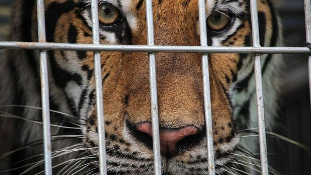 Animal Trafficking in UAE Still a Major Problem