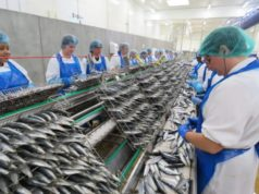 French Sardine Canner Chancerelle Builds 2nd Plant in Morocco
