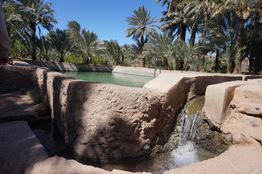 Irrigation pool surrounded by palm trees inside one of Figuig's gardens