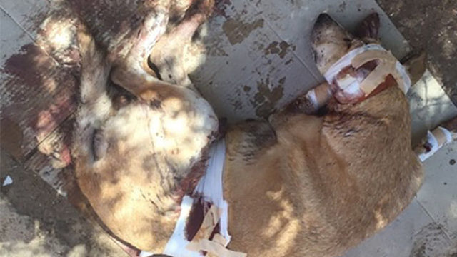 Moroccans Accuse Jazz au Chellah of Killing Cats and Dogs