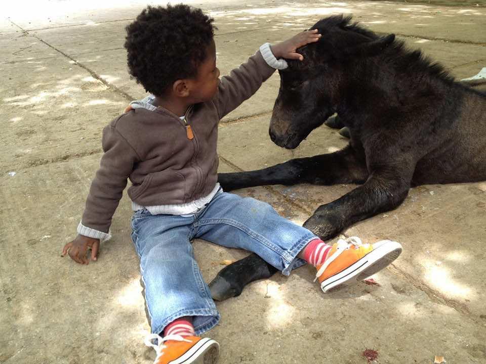 Fez's American Fondouk Promotes Equine Welfare | Morocco World News