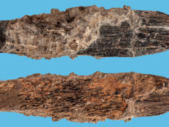 Scientists Find Oldest Bone-Knife in North Africa in Morocco