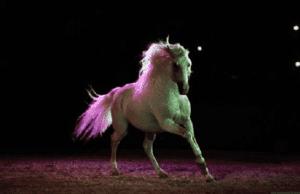Morocco's El Jadida Hosts Horse Show, King's Grand Prix