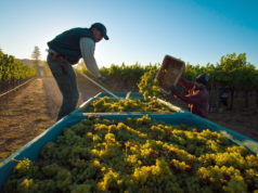 Moroccan Wine Producer to Export to China