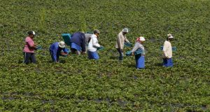Spanish Court Sentences Farmer for Exploiting Moroccan Farmhand