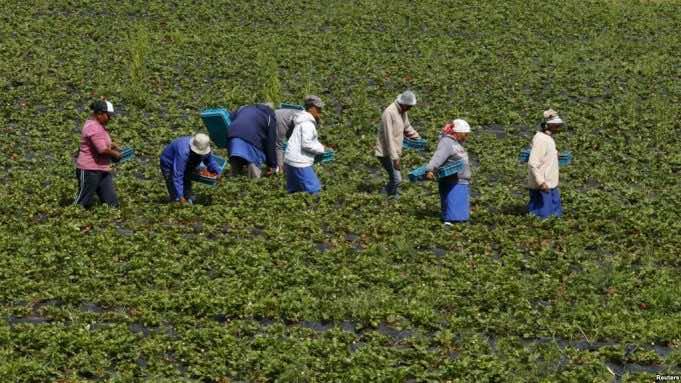 Spanish Court Sentences Farmer for Exploiting Moroccan Farmhand