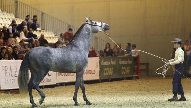 Morocco's DGSN Cavalry Steals Show at Seville International Horse Show