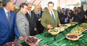 Morocco is World's 4th Largest Olive Oil Producer