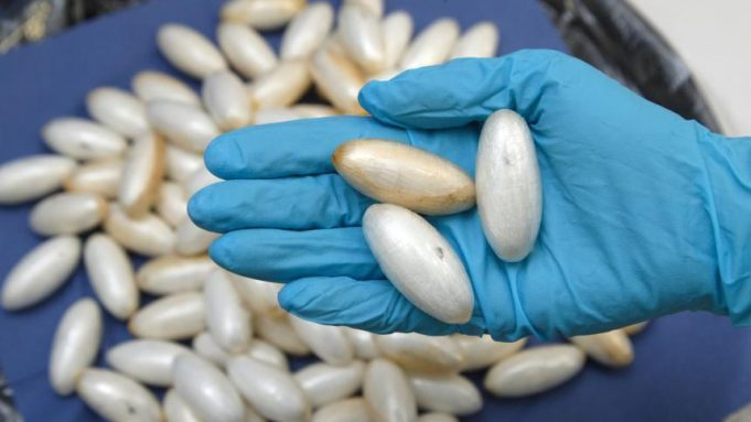 Morocco Arrests 2 Africans with 3.7 Kilograms of Cocaine in Stomachs