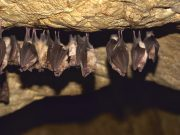Scientists Discover 2 New Bat Species in the Mountains of Morocco