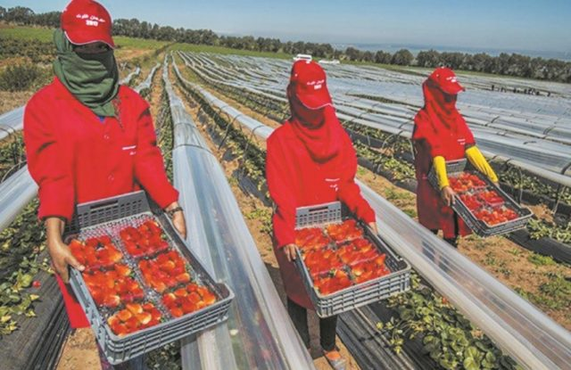 Morocco Establishes Commission to Protect Seasonal Workers in Spain