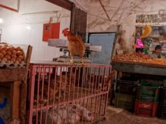 Morocco's Ministry of Agriculture Imposes Regulations on Chicken Slaughter