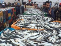 Morocco's artisanal and coastal fishing industry has increased its yields by 15% since April last year