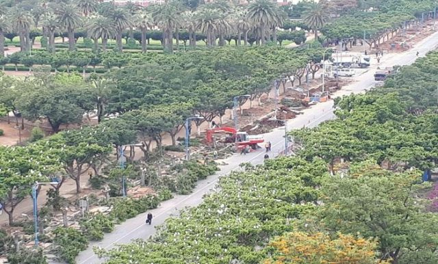 Ancient Trees Cut Down in Casablanca, No One Warned