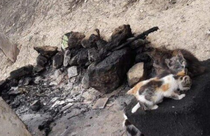 Man in Western Morocco Sets Fire to Cats Shelter, Kills at Least 25 Cats