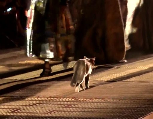 Cat Steals the Show on Dior Runway in Marrakech