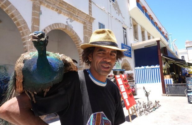 Atman Hawari and his pet peacock during the Gnaoua Festival in Essaouira.