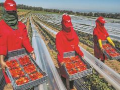 Despite Alleged Sexual Assaults, Spain Remains Attached to Moroccan Seasonal Farmers
