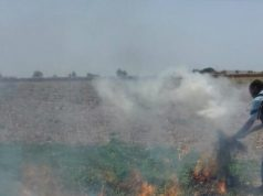 The ONSSA has destroyed mint crops after mint leaves were found to contain unauthorized pesticides.