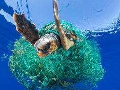 Sea turtle tangled up in fishing nets
