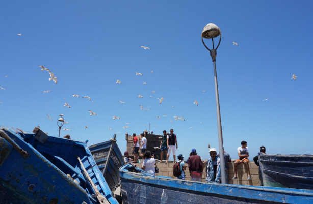 A Culinary Adventure at Essaouira's Marché Aux Poissons