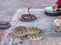 Marrakech Police Arrest Snake Charmer for Trying to Charge Tourist €40 for Photo